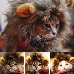 Furry Pet Costume Lion Cat Wig